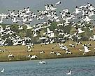 Birds flying over Dongting Lake<BR>