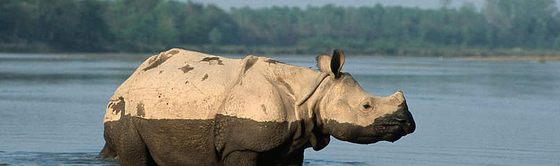Young Indian rhinoceros, Royal Chitwan National Park. / ©: WWF / Michel GUNTHER