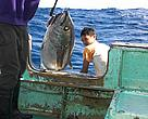 Yellowfin tuna (Thunnus albacares) fishing catch is loaded on trawler; Indian Ocean