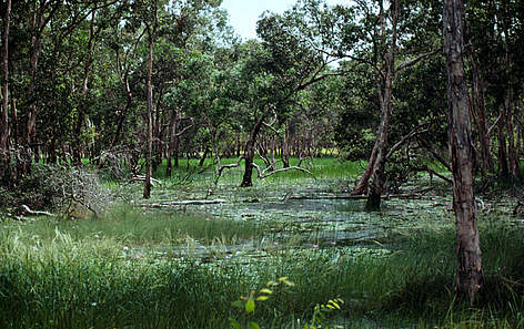 Image result for swamp