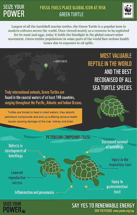 Green turtles at risk rel=