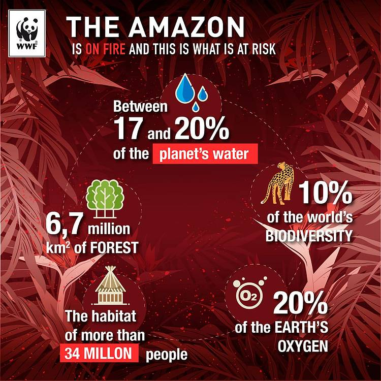 WWF Statement for Business on the Amazon Fires