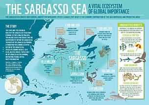 INFOGRAPHIC: Ecosystem services of the Sargasso Sea