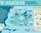 Sargasso Sea infographic
