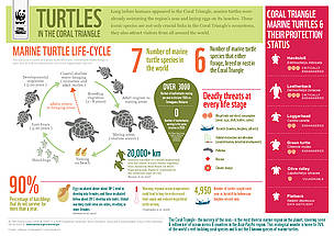 INFOGRAPHIC: Marine turtles in the Coral Triangle