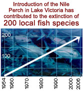 Introduction of the Nile Perch in Lake Victoria has contributed to the extinction of 200 local fish ...  	© WWF