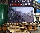 Almost 8 tonnes of illegal ivory destroyed by Singapore.