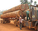 A logging truck being checked by forest guards in south-east Cameroon. Logging trucks are often used to transport illegal bushmeat to the country's major cities.