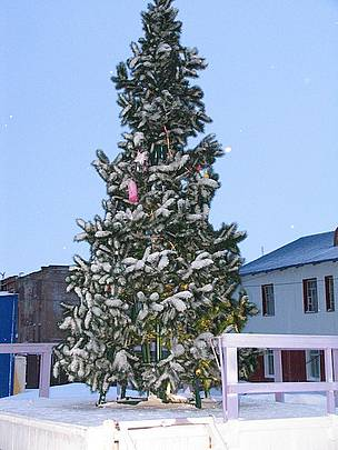 The Cape Schmidt Christmas tree.       © Tom Arnbom