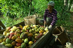 Sugend Hendratno, Long Tuyoq, East Kalimantan, Mahakam Ulu, Heart of Borneo, Cocoa, HoB, WWF Indonesia