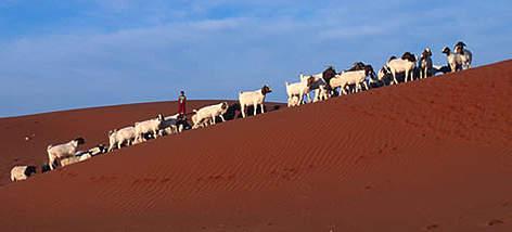 Kalahari Desert | WWF