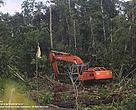 "Natural forest clearing by APP's supplier in West Kalimantan, PT Daya Tani Kalbar. Location: S0°45'37.80"" E109°48'52.21"", 18 March 2013."