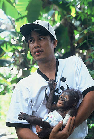 Syahir Syah of WWF-Kapuas Hulu holds Monyong, a baby orang-utan that was saved from the illegal ... / ©: WWF / Jikkie JONKMAN