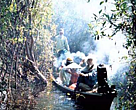 Farmers using traditional methods to collect honey in Lake Sentarum National Park, West Kalimantan