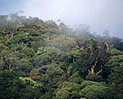 Forest under mist, Kayan Mentarang National Park, Kalimantan, Borneo, Indonesia.