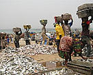Bringing fresh-landed fish from the beach into trucks, Kayar, Senegal.