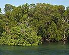 Mangroves in Kiunga Marine National Reserve, Kenya. A WWF-funded survey in the area in 1998 showed that most areas had viable mangrove forests that could support controlled extraction.<BR>