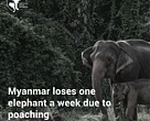 Voices for Momos launches petition to end illegal wildlife trade in Myanmar.