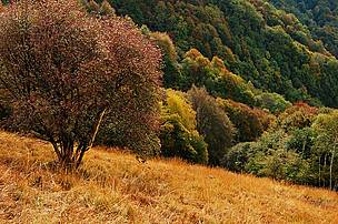 One of several dry meadows on the slopes of Monte Generoso in Ticino, Switzerland