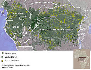/ ©: Congo Basin Forest Partnership