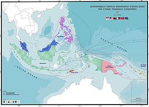 Leatherback turtle migrations in the Coral Triangle