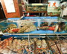 Live reef fish in a market