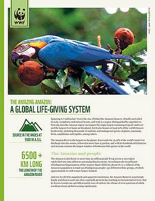 The amazing Amazon: A global life - giving system