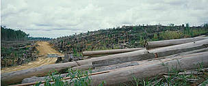 Sabah (Borneo), Malaysia. Felled forest burnt to plant first crop of Palm oil on estate. Sabah, ... / ©: WWF / Sylvia Jane YORATH