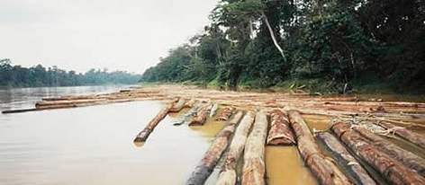 Rain forest timber awaiting conveyance down the Kinabatangan river. East Sabah. Borneo. Malaysia. rel=