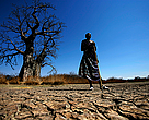 A Maasai stands on cracked earth in front of a baobab tree close to the silted up Kioga river, which feeds into the Great Ruaha river.