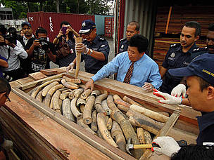 Ivory trade in Thailand  to close
