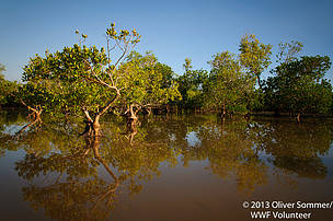 The mangroves at high tide
