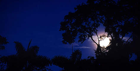 Moonrise on Manu river. View of lowland rainforest, landscapes, flora and fauna. Manu National ... rel=