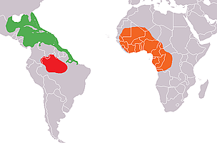 Range of the three manatee species  	© Wikimedia Commons
