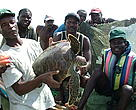 Primeiras and Segundas Archipelagos fishermen showing an accidentally captured marine turtle (bycatch).