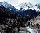 Upper Naltar Valley Protected forest at 11000 feet Northern Pakistan