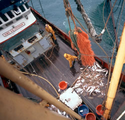 Landing a meagre catch, North Atlantic Ocean. / ©: WWF / Mike R. JACKSON