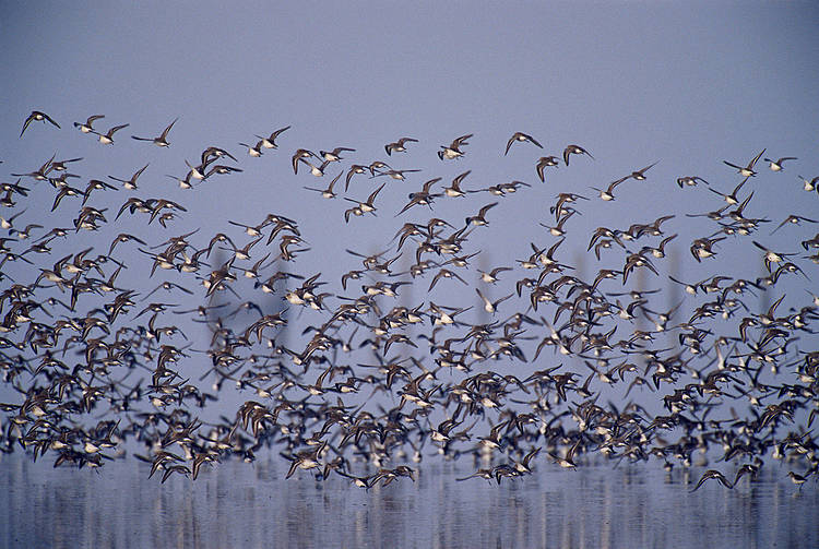 Spanish court rules out dredging in Doñana National Park