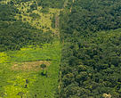 An aerial view of a deforested area next to the Peruvian forest.