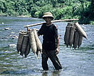 Fish are an important source of protein to the 60 million people living in the Mekong River Basin.<BR>