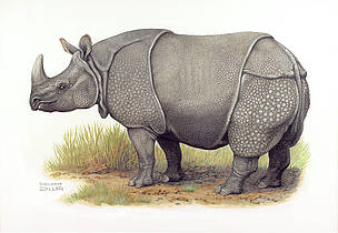 Greater one-horned or Indian rhinoceros (Rhinoceros unicornis)  	© WWF / Helmut Diller