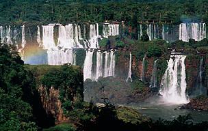 Drop in deforestation in Argentina's Atlantic Forest