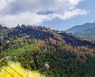 Forest fires pose a serious threat to Bhutan's forests
