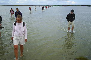 Guided tour in shallow waters in Læsö National Park