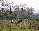 WWF-Nepal