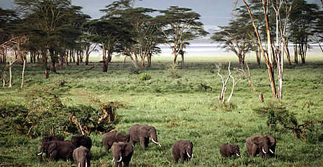 Our Natural Resources Forest And Wildlife