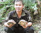 Nguyen Huu Hoa in the field releasing Bourret's box turtles confiscated from poachers.
