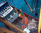 EU Fisheries Ministers have ignored scientific advice and will let overfishing continue.