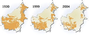 Orangutan distribution on Borneo (Indonesia, Malaysia). The distribution of Orangutan on Borneo is ... / ©: Hugo Ahlenius, UNEP/GRID-Arendal