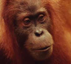 <br /> © WWF / Мишел TERRETTAZ